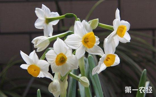 凌波仙子是什么花?