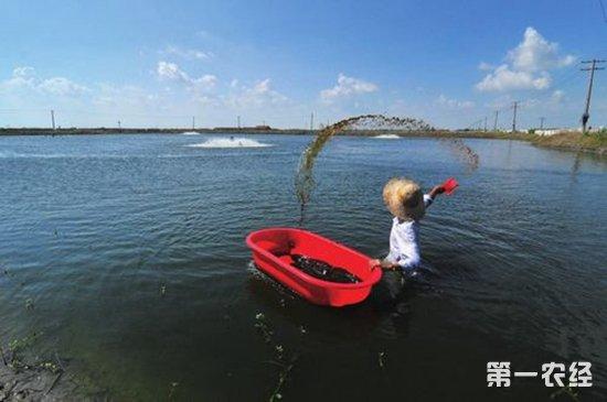 鱼塘改小龙虾养殖池塘设计图