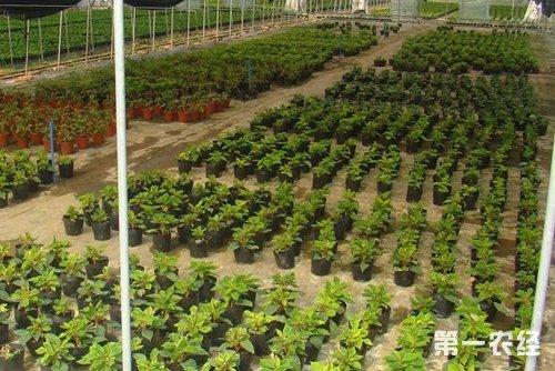 花卉苗木生产基地
