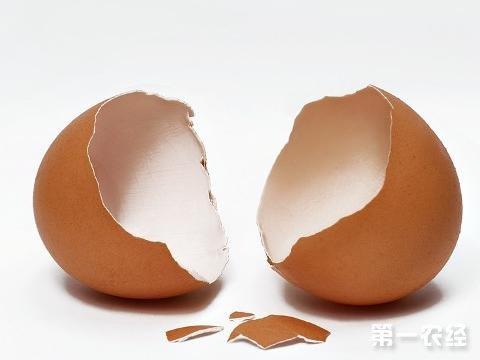 如何提高蛋壳质量降低破蛋率 养鸡问答 第一农经网