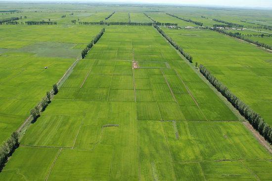 农业部将投入15亿资金支持绿色高产高效创建