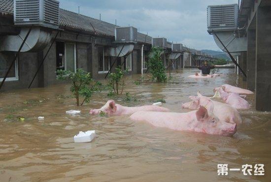 面对洪水的动物