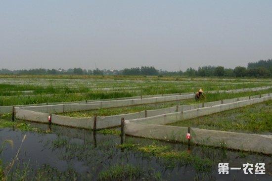 小龙虾养殖池设计图欣赏 【专家解答】小龙虾养殖池应根据生产规模