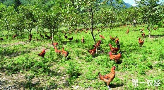 现应用的几种生态种养殖模式
