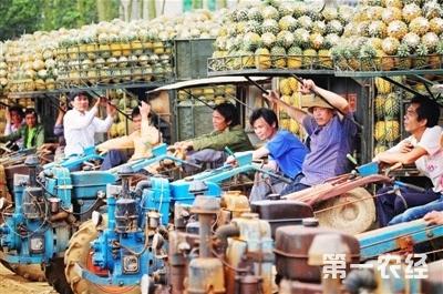 广东徐闻县曲界镇菠萝交易市场计划扩建到300亩
