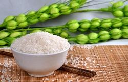吉林松原特产:莲花莲籽米