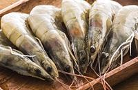 黑龙江鸡西特产:兴凯湖秀丽白虾