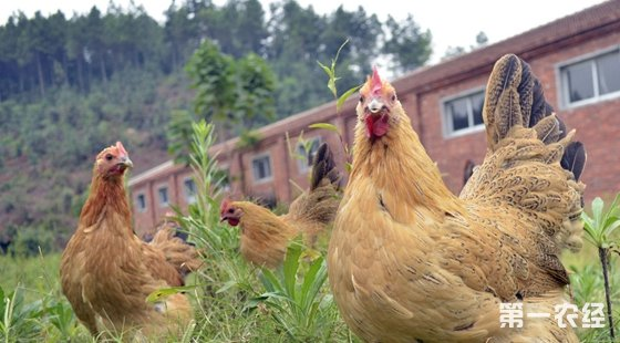 密闭鸡舍门窗,防止小动物进入鸡舍;用铁丝网封住排气孔,以防飞鸟进入.