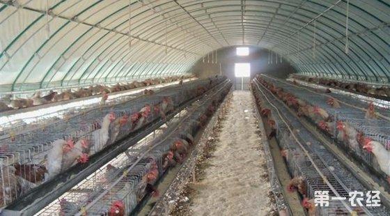 塑料大棚养鸡技术_大棚鸡舍设计图/聚氯乙烯钢管大棚鸡舍 - 鸡舍建设 - 第一农经网