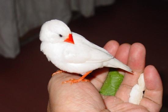 珍珠动物编织手法