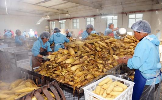 山西大同:扶持农产品加工业 销售达43亿元