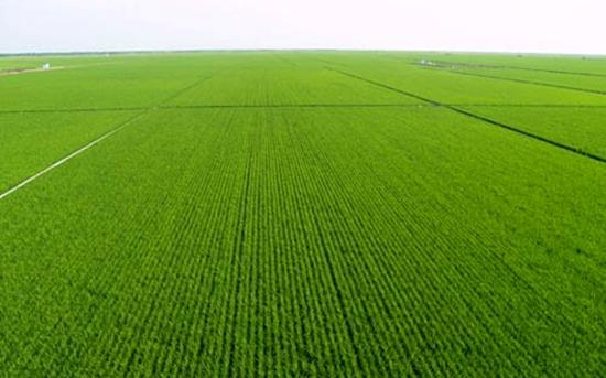 广东惠州:实际耕地保有量达226万亩