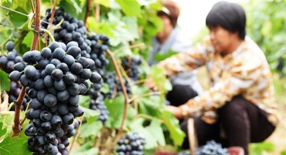 """河北衡水:大力发展""""订单农业""""促农增效增收"""