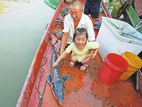 安徽和县:渔民误捕珍稀野生中华鲟后放生
