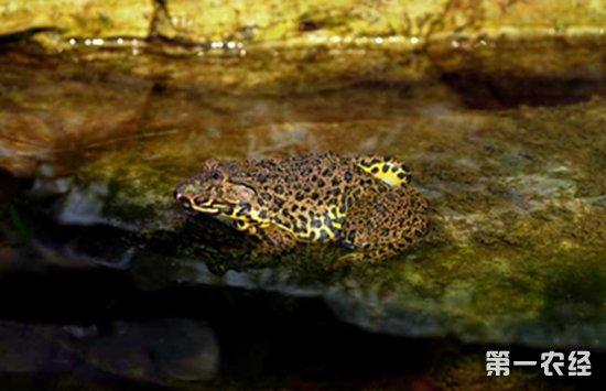 青蛙的种类有哪些?