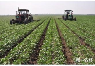 大豆窄行密植高产栽培技术