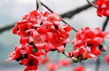 可食用的花朵吃法与图片欣赏(上)