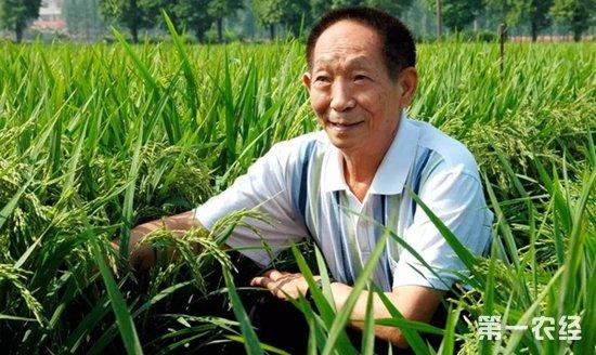 袁隆平 将超级稻推广到更多地区