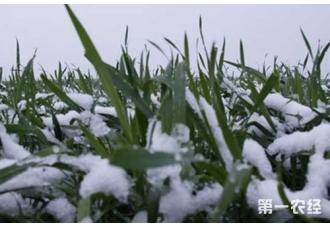 冬小麦节水省肥高产技术要点