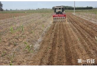 冬小麦宽幅精播栽培技术