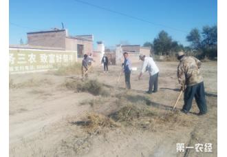 新疆兵团第八师一四九团第十五党支部积极做好棉场清理准备工作