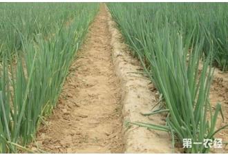 大葱什么时间播种?大葱什么时候收获?