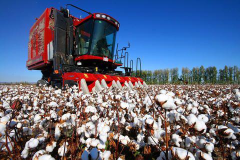 三党支部全面展开机采棉采收工作