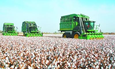 新疆八师149团农业公司二区多项举措确保机械采收顺利进行