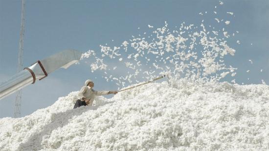 <b>新疆八师149团二区多种举措抓好机采棉采收质量</b>