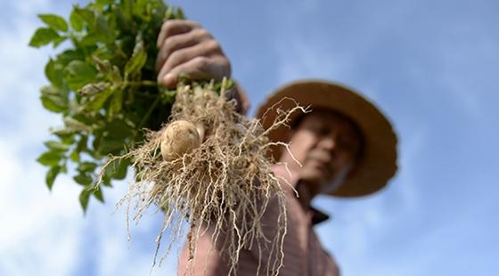 甘肃:严重旱灾农作物面临大面积减产甚至绝收