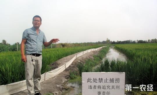 塔河上游规模养殖稻田小龙虾 实现亩千斤稻百公斤虾