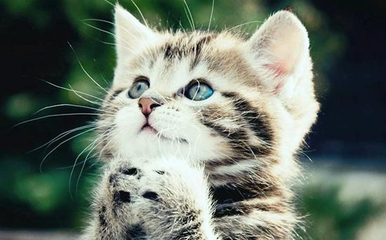 猫为什么怕黄瓜?
