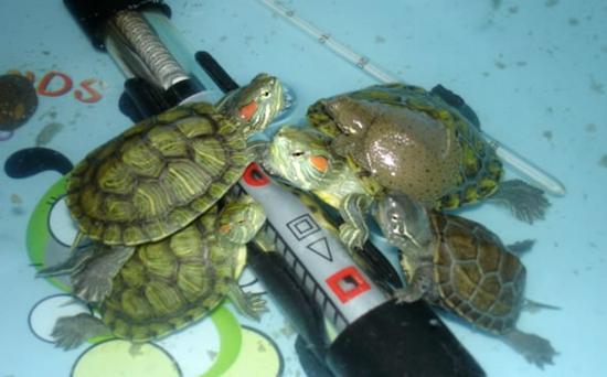 乌龟过冬加温的方式有哪些?
