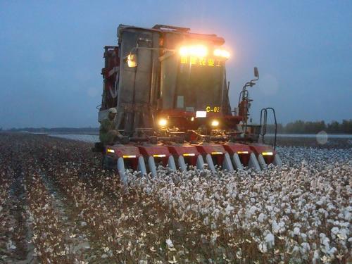 <b>第八师一四九团农业公司抓时间抢速度机采备耕两不误</b>