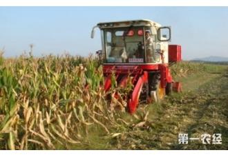 玉米秸秆还田技术要点