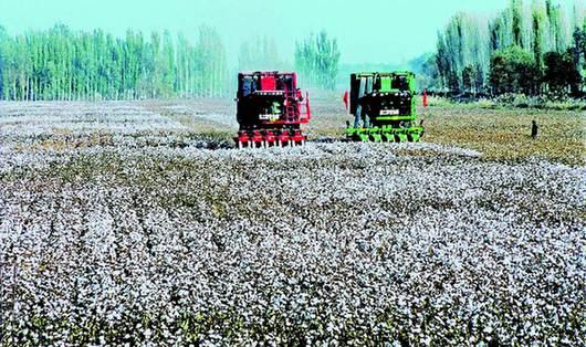 <b>一四九团农业公司第五党支部加快棉花采收工作</b>