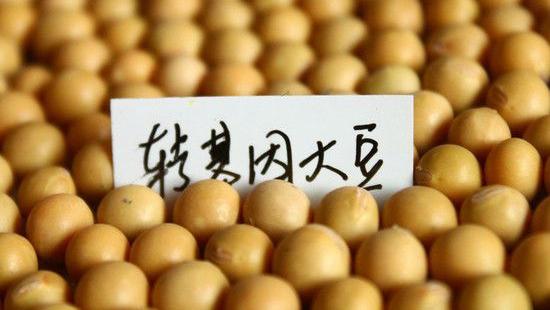 新食品安全法 黑龙江食品安全法修订 禁种转基因玉米大豆