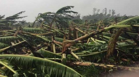 双台风造成华南地区(农业)农作物受灾面积705千公顷