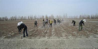 新疆八师149团农业公司二区有序开展备耕工作