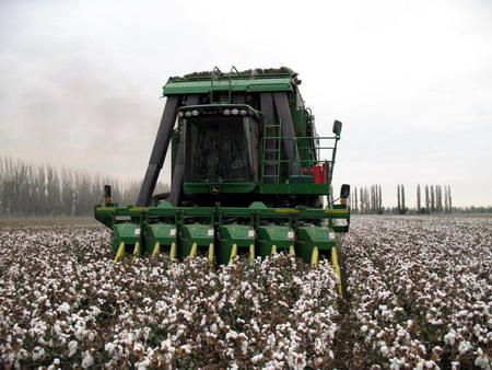 一四九团再组织、再动员加快棉花采收及备耕进度