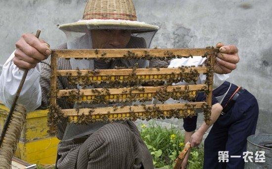 气泡蜜蜂针帽子编织图解