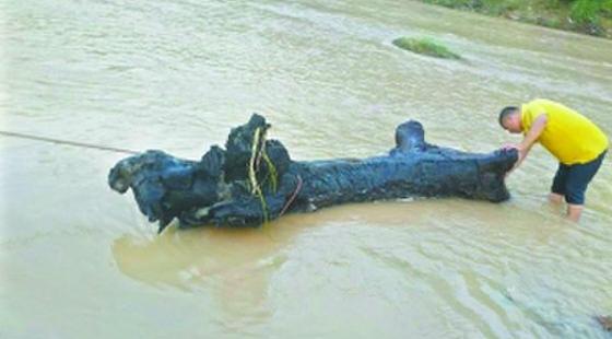 河源市和平县:台风送来千年乌木年约4000年