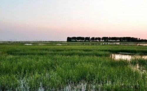 到2020年,湖北省将退耕还湿恢复湿地7745公顷