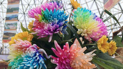 第十二届中国(荆门)菊花展览会开幕式今天在荆门植物园举行