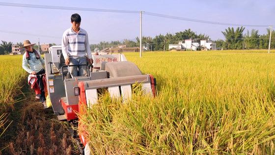 海南万宁:全市水稻投保超3万亩 政府补贴60.9万元