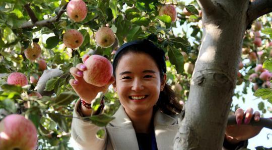 """青海:举办苹果""""采摘节""""发展休闲观光农业"""