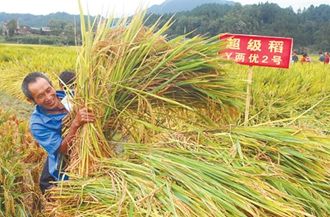 我国超级稻有哪些品种?中国超级稻品种分布范