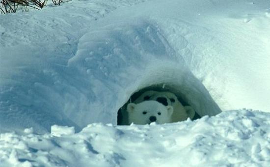 冬眠的动物都有哪些?