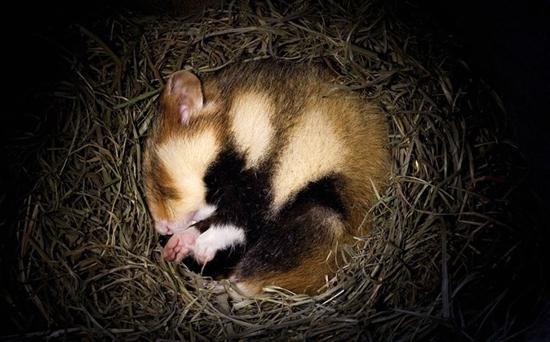动物为什么要冬眠?动物冬眠的方式有哪些?