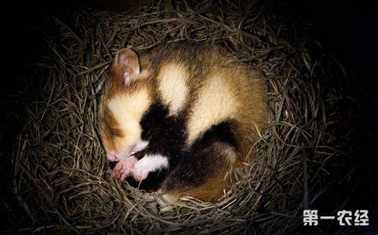 动物冬眠的方式有哪些?
